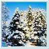 bela zima